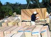 Sell Mount White sandstone Slabs