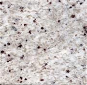 Persia white Granite