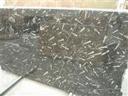 Fossil Black Marble
