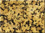 Chrysan Yellow/Granite