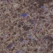 Sell Blue Eyes granite tiles