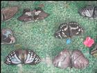 Stone Animal - Butterfly