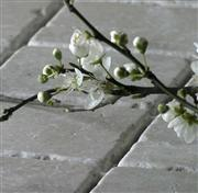 Tumbled White Travertine