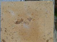 Light Yellow limestone 001