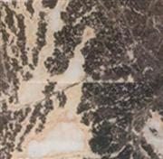 Fei Coral Marble