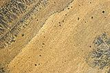 Sand Fossil