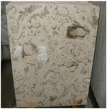Fossillized Marble