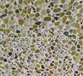 Natural color flooring pebble