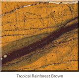 Tropical Rainforest Brown