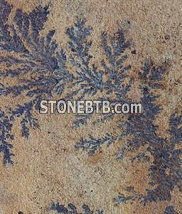 Fossil mint sandstone