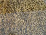 Tiger Skin Rusty with unbeatable prices