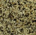 Jiangxi Green Granite