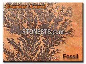 Fossil Sandstone