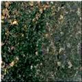 Prairie Green Granite