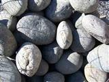 Mexican Beach Pebbles  1