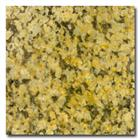 Gold Granite Tile Gold Granite Slabs